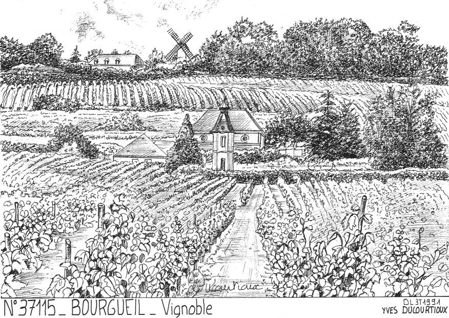 Carte Postale N° 37115 - BOURGUEIL - vignoble